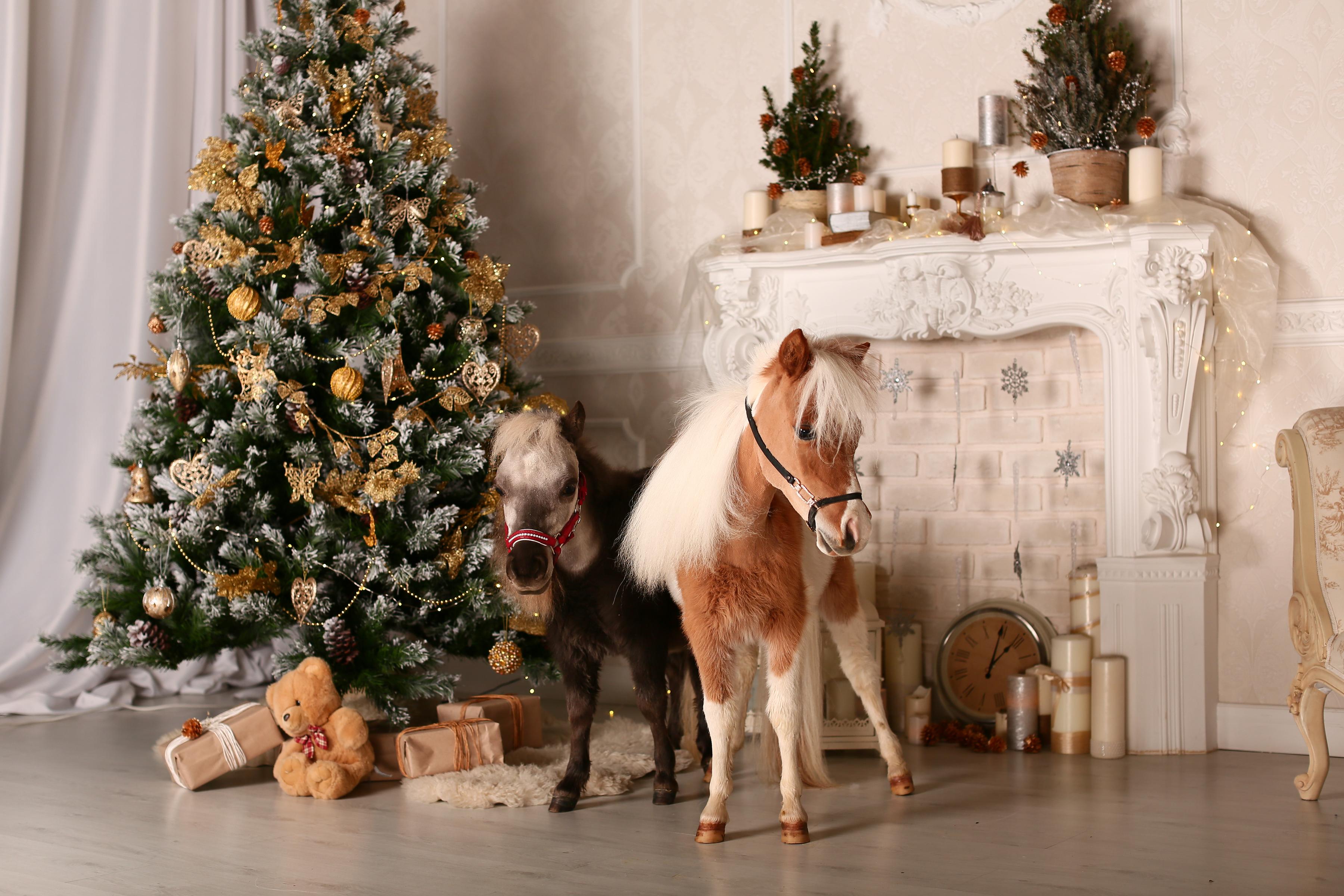 Чем накормить лошадь в новый год