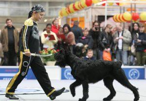 Дог-дансе – танец с собаками