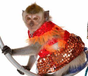Живая обезьянка