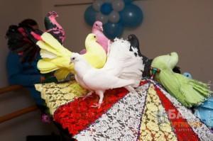 дрессированные голуби 4