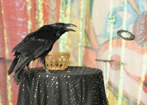 как дрессировать ворона