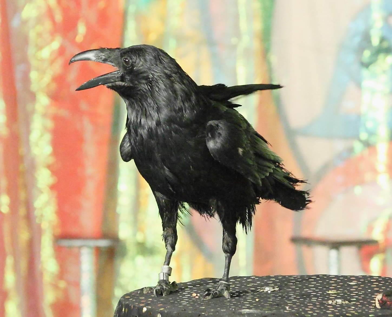 шоу с птицами
