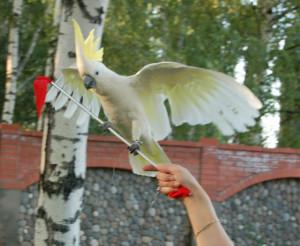 8 (916) 601- 58 -77Дрессированный попугай