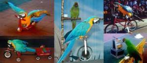 8(965) 380 – 13 – 11. Шоу попугаев