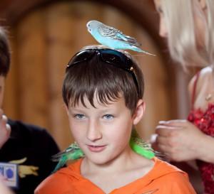 Фокусы с птицами