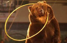 8(965) 380 – 13 – 11. Дрессированный бурый медведь