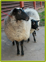 8(965) 380 – 13 – 11. Аренда животных для съемки