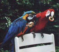 8(965) 380 – 13 – 11.  Спектакль «Путешествие с животными»