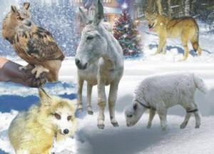 8(965) 380 – 13 – 11. Представление с животными