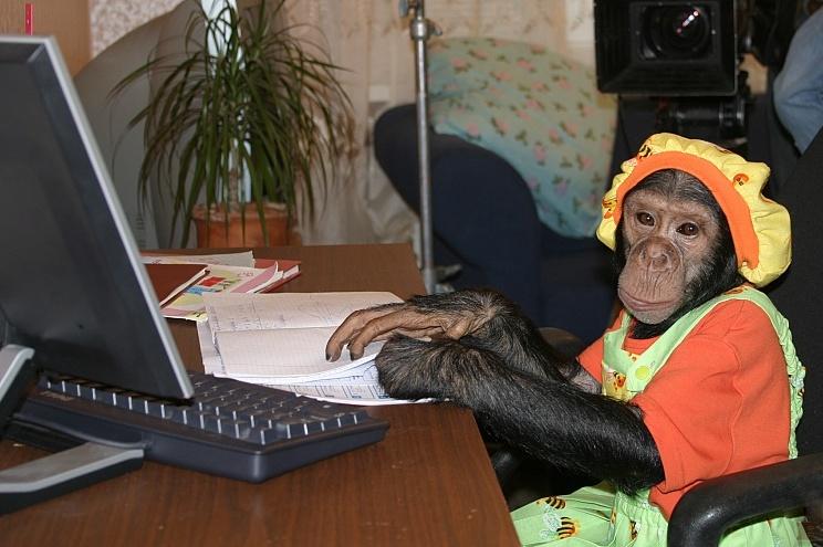 8(965) 380 – 13 - 11 Умное шимпанзе