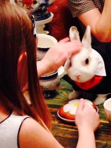 кролики на праздник