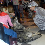 8(965)380-13-11. волк для съемок