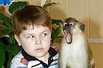 Дрессировка обезьян капуцинов || Дрессировка обезьян капуцинов