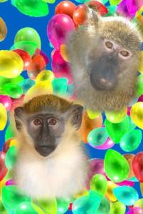 8(965) 380 – 13 – 11. Дрессированные обезьяны видео