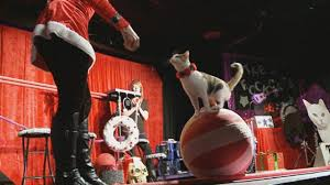 8(965) 380 – 13 – 11. Шоу дрессированных кошек.