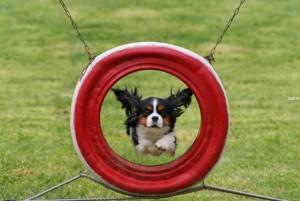 8 (916) 601- 58 -77дрессировка собак