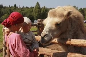 8 (916) 601- 58 -77 купить верблюда