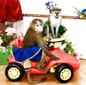 8 (916) 601- 58 -77 шоу животных для детей