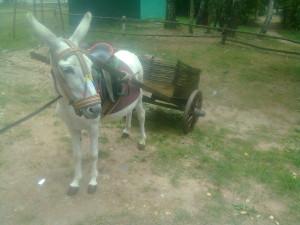 Лошади и ослы 5