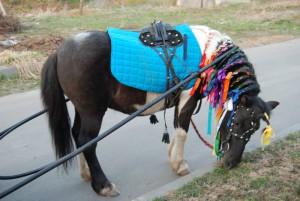 8(965) 380 – 13 – 11. Заказ лошадей на свадьбу