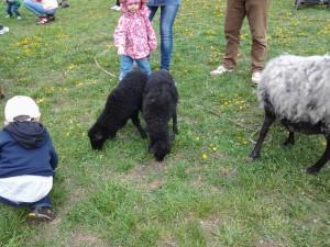 8 (916) 601- 58 -77  Домашние животные для детского сада