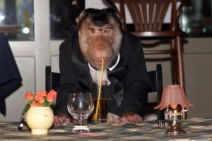 8 (916) 601- 58 -77 Животные в ресторане