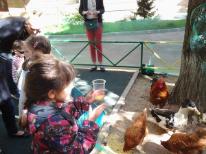 8 (916) 601- 58 -77 Животные в школе