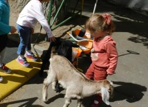 8(965) 380 – 13 – 11. Ферма в детском саду