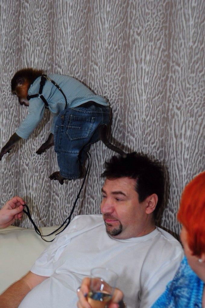 обезьянка мангобей