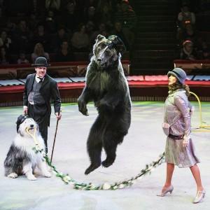8 (916) 601- 58 -77 Медвежье шоу