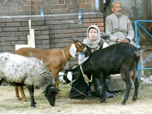 8 (916) 601- 58 -77 Год козы 2015