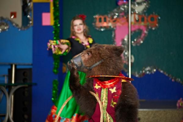 8 (916) 601- 58 -77 Как вызвать медведя