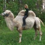 8(965) 380 – 13 – 11. Покататься на верблюде