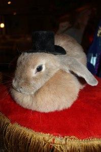 8(916) 601- 58 -77 шоу кроликов