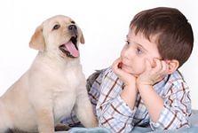 8(965) 380 – 13 – 11. Какое домашнее животное завести ребенку