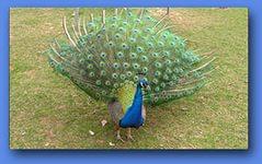 8(965) 380 – 13 – 11. Парк птиц Москва