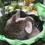 кролики 2