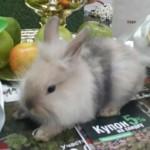кролики 3