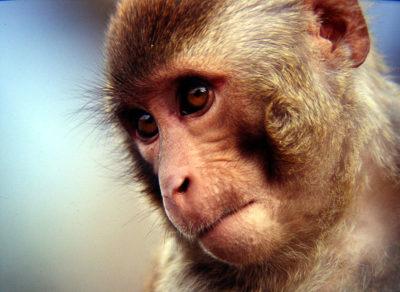 8-965-380-13-11 контактный зоопарк с обезьянами(1)