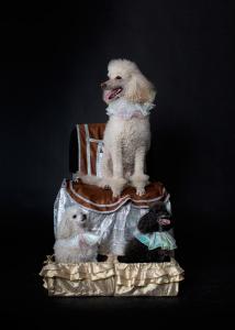 8-965-380-13-11 Шоу дрессированных собачек