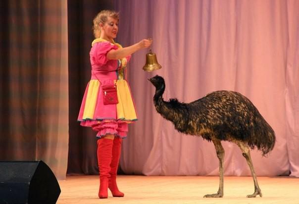 8-965-380-13-11 дрессированный страус