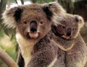 8(965) 380 – 13 – 11. Животные Австралии