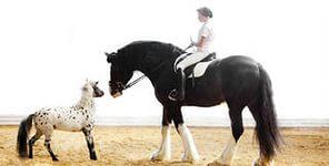 Выставки лошадей в Москве 2