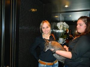 кенгуру в Москве