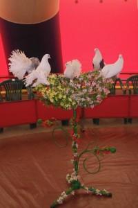 шоу дрессированных голубей
