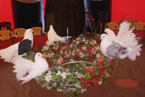 шоу голубей