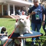 кошачье зрение