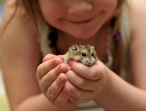 животное ребёнку в 3 года