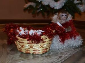 обезьянка на праздник1