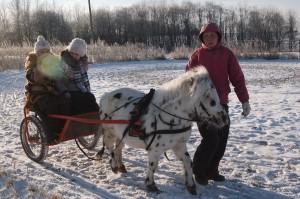 мини-лошадки катает
